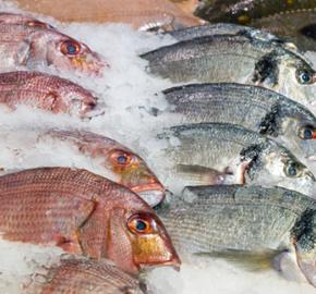 Algarve fresh fish